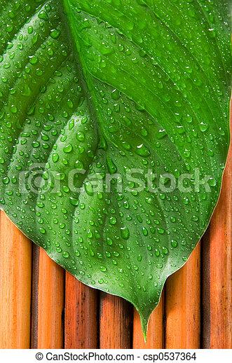 Hoja verde - csp0537364