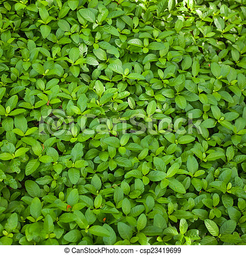 Antecedentes de hoja verde - csp23419699