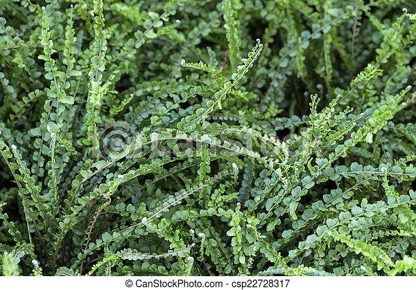 Antecedentes de hoja verde - csp22728317