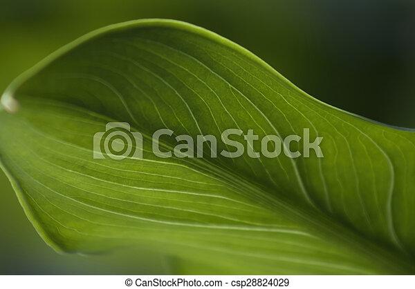 color Verde Dossiers con F/ástener tama/ño folio Dohe 91354