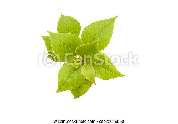 Hojas verdes en fondo blanco con recortes - csp22619860