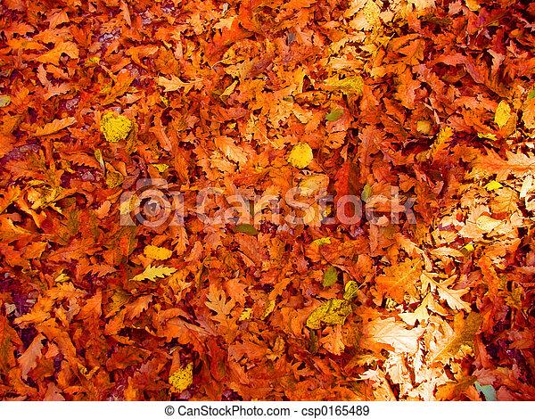 El fondo de las hojas - csp0165489