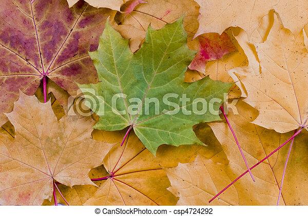 Las hojas de otoño - csp4724292