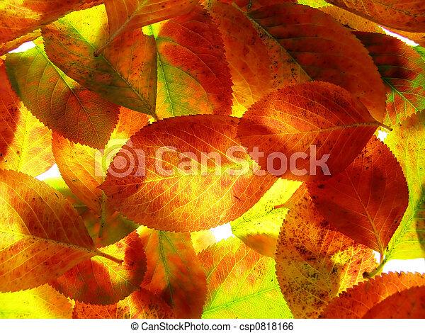 Las hojas de otoño - csp0818166