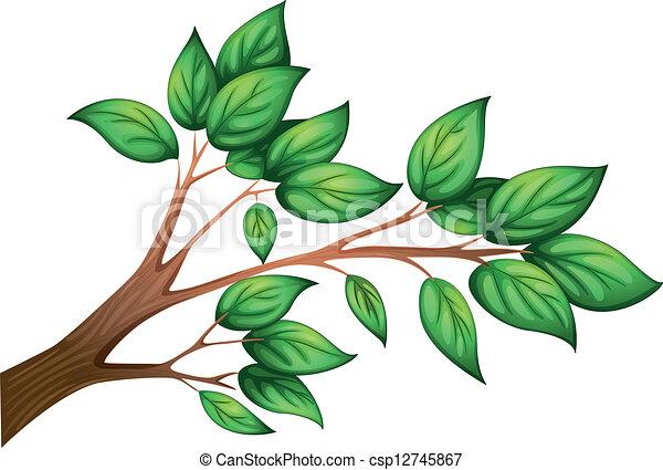 Hojas Rama De árbol Rama Hojas árbol Ilustración Plano De