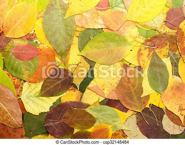 hojas - csp32148484