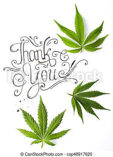hojas, usted, agradecer, tarjeta, marijuana - csp48917620