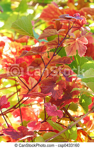 Hojas de uva - csp0433160