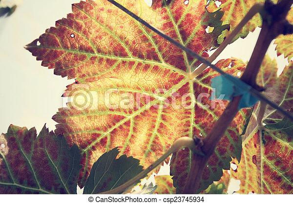 Hojas de uva - csp23745934