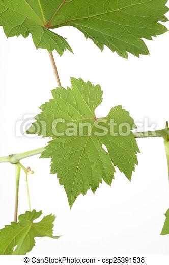 Hojas de uva - csp25391538