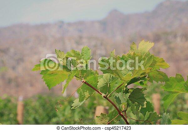 Hojas de uva - csp45217423