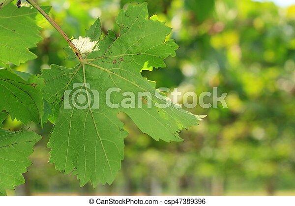 Hojas de uva - csp47389396