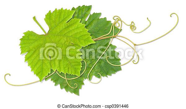 hojas, uva - csp0391446