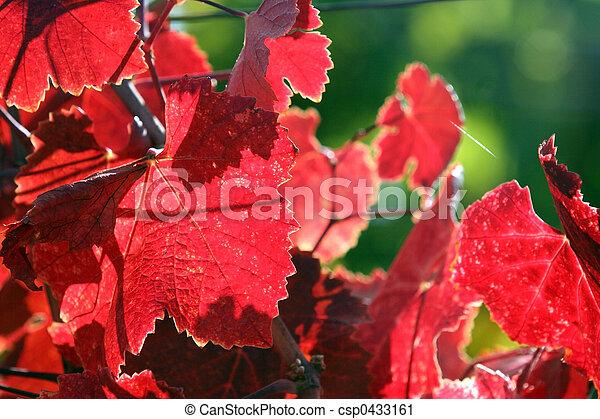 Hojas de uva - csp0433161