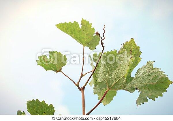 Hojas de uva - csp45217684