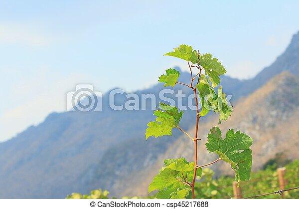 Hojas de uva - csp45217688