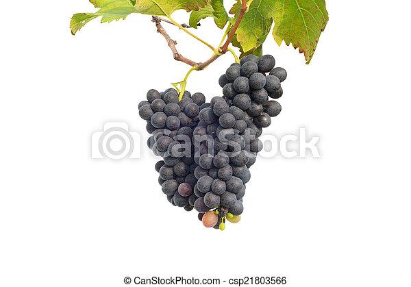 uva roja con hojas - csp21803566