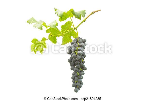 uva roja con hojas - csp21804285