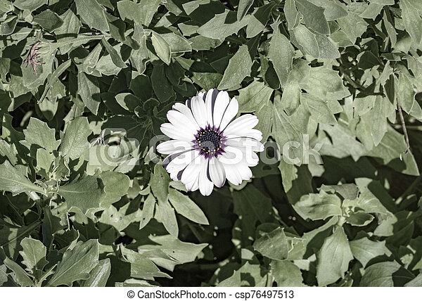 hojas, verde, alrededor, flor - csp76497513