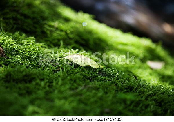 Moho verde y hojas - csp17159485