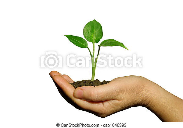 holding a plant between hands - csp1046393
