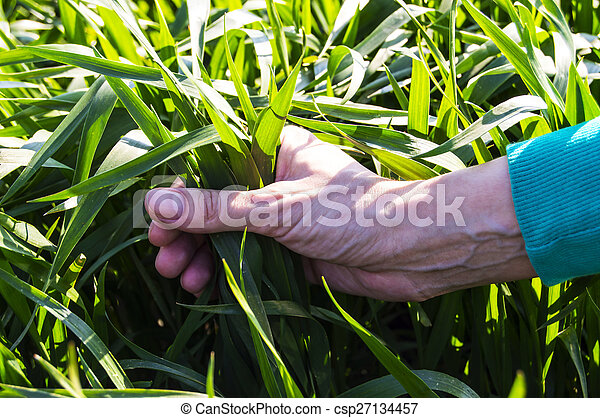 holding a plant in her hand - csp27134457
