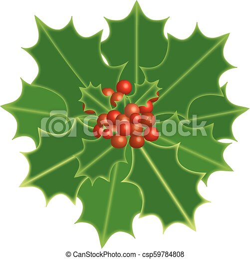 Holly Berry Christmas Theme Symbolic Plants Holly Vector Format