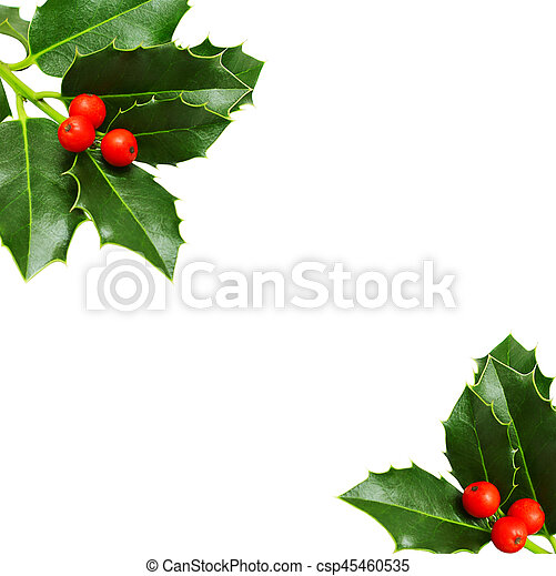 holly border isolated on white christmas background