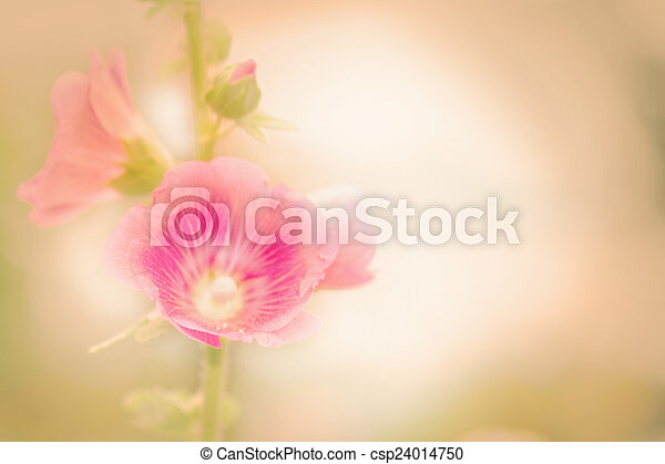 Holly Hock Flowers Hollyhock Pink Vintage Retro Pastel Style Soft Background