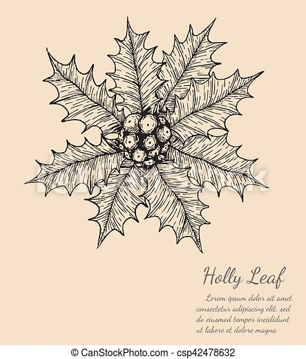 holly leaf sketch by hand drawing. - csp42478632