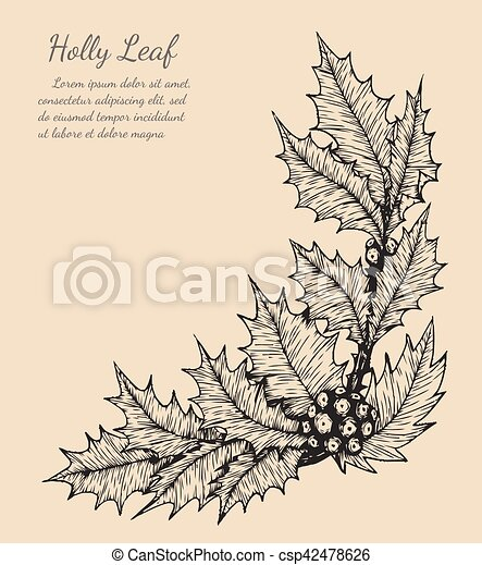 holly leaf sketch by hand drawing - csp42478626