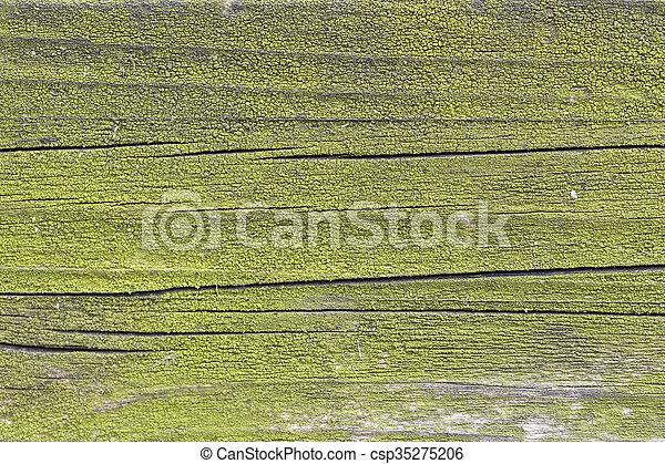 holz, grün - csp35275206