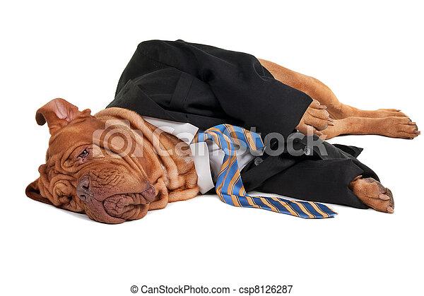 hombre de negocios, perro, cansado - csp8126287
