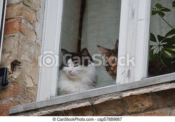 Home Cats Looking Outside From The Window Two Domestic Cats Near A