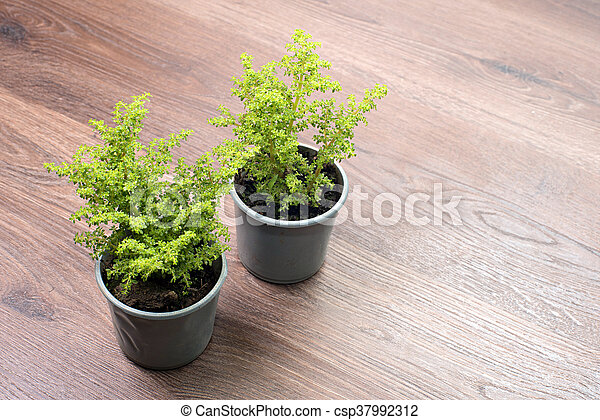 Home plant in pot - csp37992312