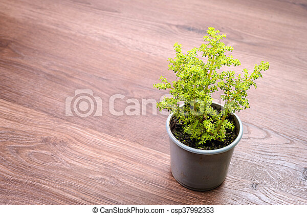 Home plant in pot - csp37992353