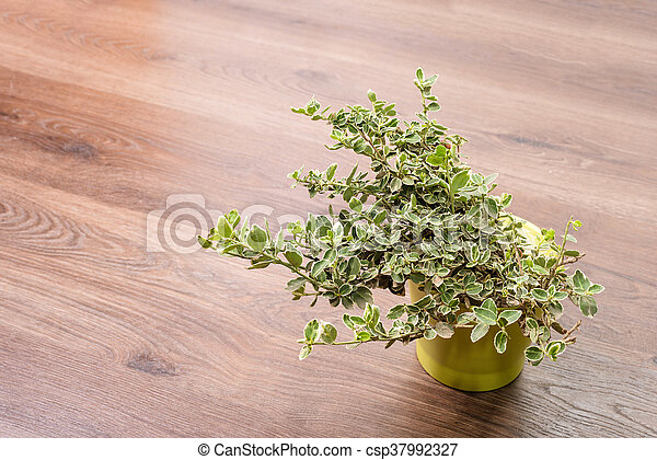 Home plant in pot - csp37992327