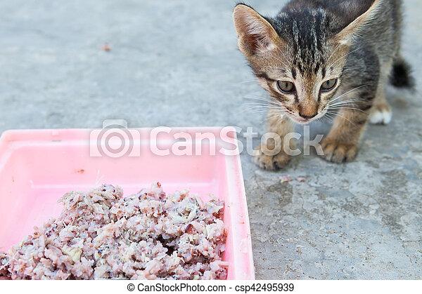 homeless little kitty eating rice on dish