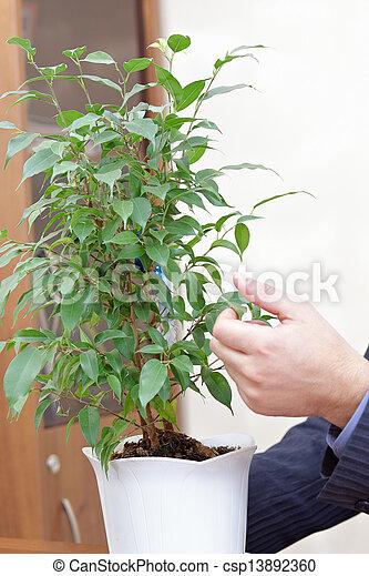 homme affaires, plante, maniement, mains - csp13892360