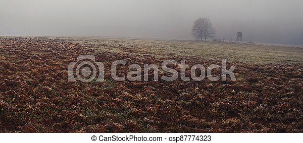 honba, kanec, kopyto, divoký, slepý, pluh snímek, mlha, krajina, bojiště - csp87774323