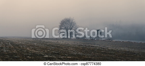 honba, slepý, bojiště, mlha, krajina, kopyto - csp87774380