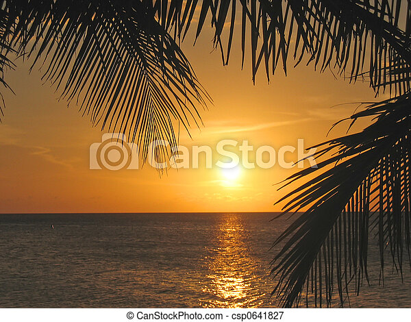 honduras, wyspa, na, drzewa, dłoń, roatan, morze, caraibe, przez, zachód słońca - csp0641827