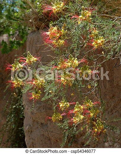 Honey Locust Flowers Bizzare Blooms Of The Honey Locust A
