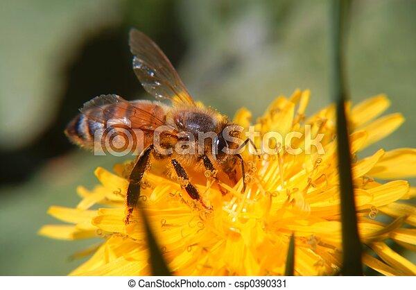 Honeybee macro III - csp0390331