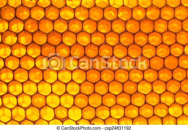 Honeycomb background honeycomb background stock photographs honeycomb background csp24831192 voltagebd Image collections