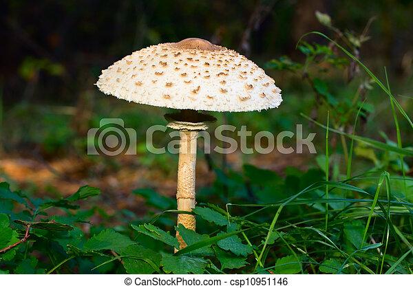 Setas parasol - csp10951146