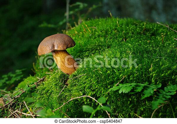 Mushroom en el musgo - csp5404847