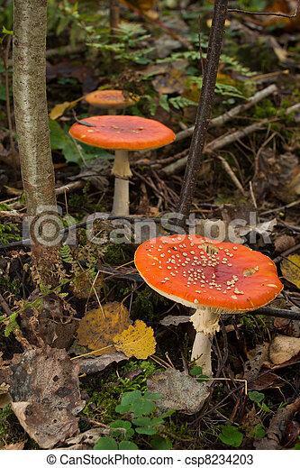 Hongos en el bosque verde - csp8234203