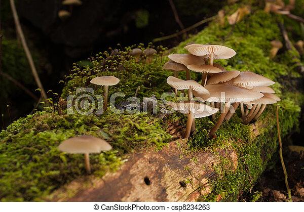 Hongos en el bosque verde - csp8234263