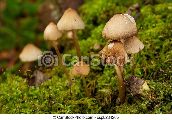 Hongos en el bosque verde - csp8234205